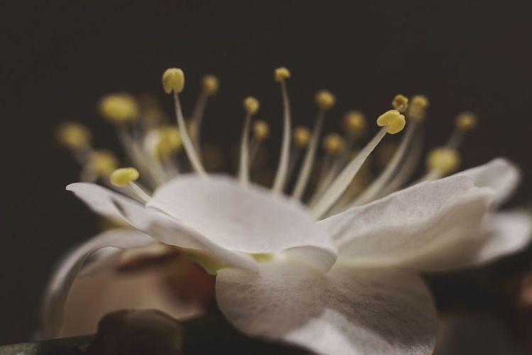 ヒライテル Eyeemphotography Photography EyeEm Best Shots Eye Em Nature Lover Flowering Plant Flower Petal Freshness Fragility Vulnerability  Inflorescence Beauty In Nature White Color