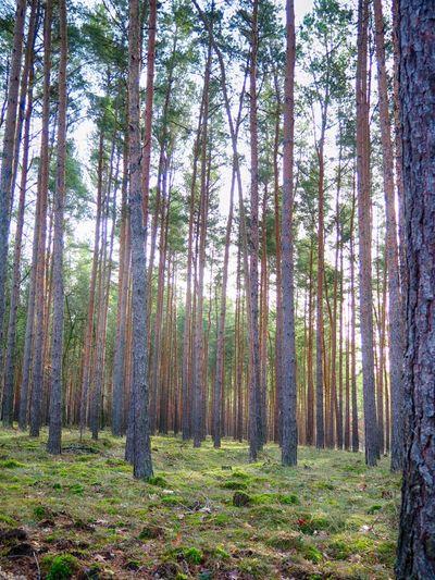 Herbst Herbstspaziergang Herbststimmung Herbst🍁 Im Wald Sonnenschein  Wald Waldspaziergang