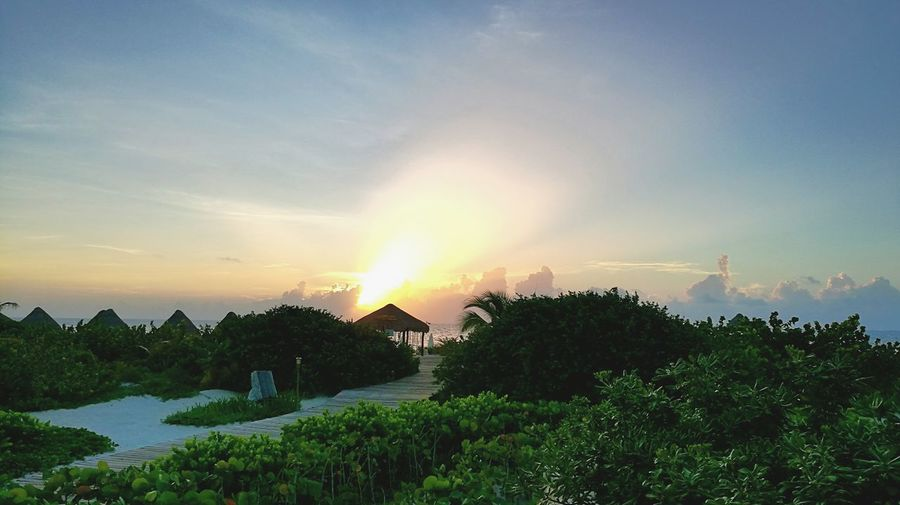 Magic travel Beauty Trip Sunset Sky Beauty In Nature Nature Cancun☀