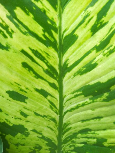 A leaf pattern Green Green Earth Pattern Frond Palm Tree Tree Leaf Fern Botany Palm Leaf Close-up Plant Green Color Plant Part