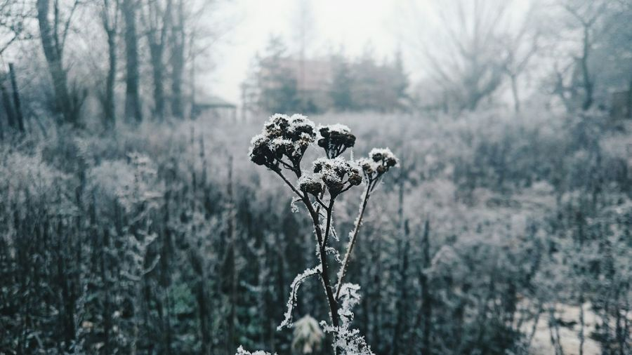 Close-up of frosty plants during winter
