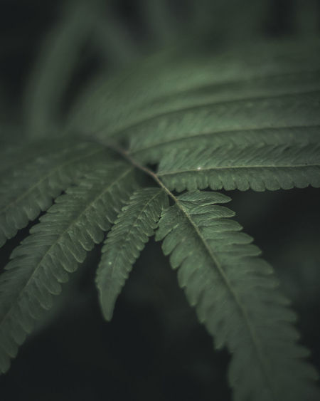 Tropical Tropical Plants Leaf Leafs Photography Green Natural Moody Moodygram Moody Photography Forest Insect Close-up Animal Themes Green Color Leaf Vein Leaves