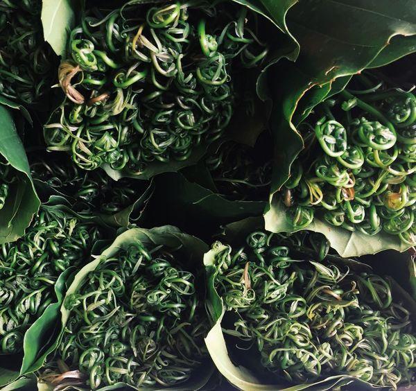 Midin, Sarawak's famous vegie. Vegetable Freshness Food
