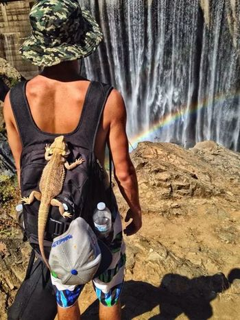Reptar knows how to travel Bearded Dragon Waterfall Rainbow Hiking