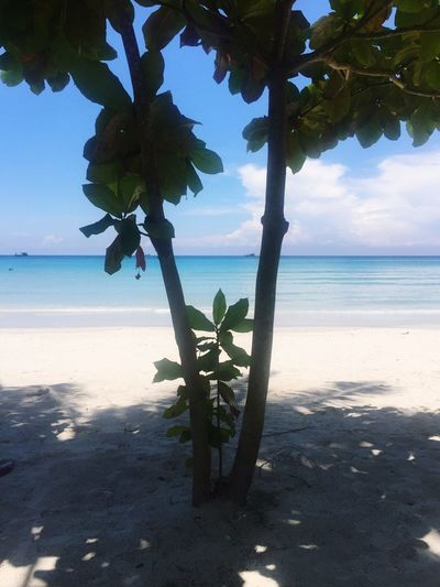 Beach Sea Nature Sand Horizon Over Water Beauty In Nature Shore Sky Leaf Water Scenics Growth Tranquil Scene Tranquility Day Sunlight Outdoors Tree Plant No People