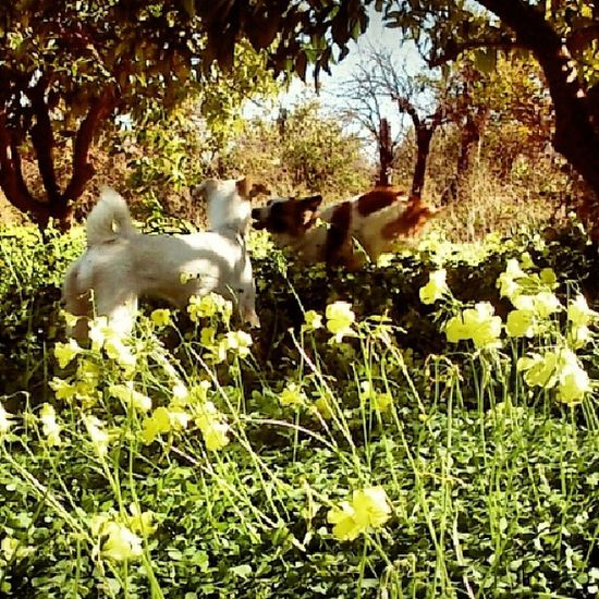 I Love My Dogs Cute Pets Nature Fresh Air MyPhotography Valencia Landscapes