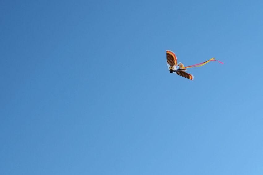 Kite in a Blue Sky Blue Blue Sky Clear Sky Copy Space Day Flying Kadyny Kite Kite Flying Latawiec Low Angle View Mid-air No People Outdoors Poland Polska Winter Zima
