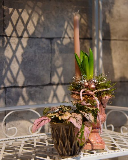 Close-up of potted plants in basket against wall