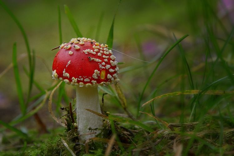 Macro Photography Atumn Photograhy Beauty In Nature Close-up Fly Agaric Mushroom Mushroom Nature Outdoors Red Color