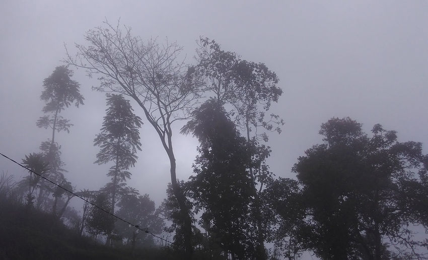 Misty Morning Misty Misty Day Beauty In Nature Branch Clear Sky Day Forest Growth Landscape Low Angle View Misty Forest Misty Landscape Misty Morning Misty Mornings Misty Mountains  Mistyfoggymilkymoody Mistymorning Nature No People Outdoors Scenics Sky Tranquil Scene Tranquility Tree