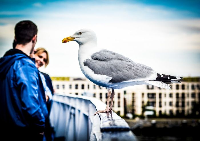 Holiday POV Seagull Seagulls Birds Nikon 50mm Shootermag Eye4photography  Streamzoofamily People Watching