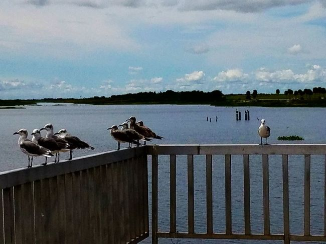 A Crowd Apart Not all together Animal Themes Perching Flock Of Birds Wildlife Findings In Nature Capturing The Moment Taking Pictures. 💟. Enjoying The Afternoon. Capturing The Moment!🙂 Animals In The Wild Railing