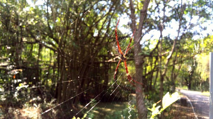 Hello Spider Nature Spider Wildlife Thailand EyeEm Nature Lover The _ Mazzalong Taking Photos