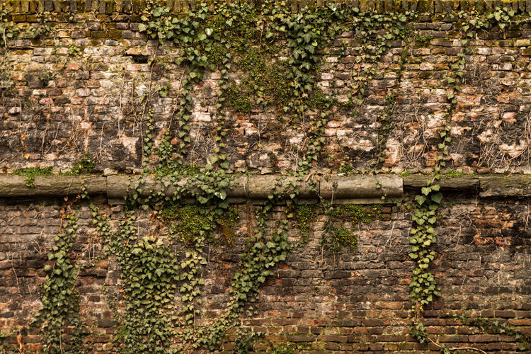Architecture Brick Wall Built Structure Ivy Nature Old Outdoors Plant Wall - Building Feature