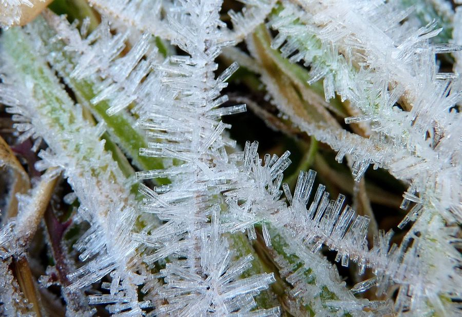 Beauty In Nature Close-up Cold Temperature Day Frost Frozen Growth Ice Makro Makro Photography Maximum Closeness Nature Needle - Plant Part No People Outdoors Snow Winter