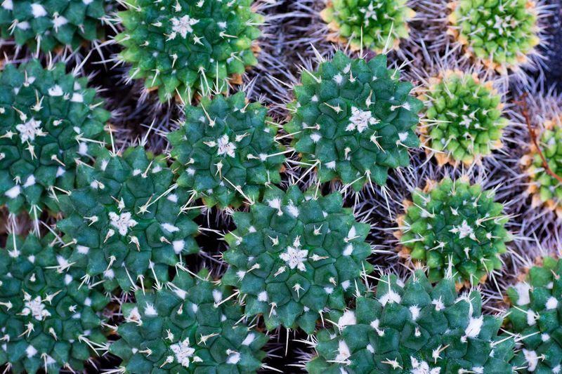 雨の日は、植物園かな(*´꒳`*) 植物園 サボテン Macro Growth Cactus Green Color Nature Thorn Full Frame Plant Close-up Beauty In Nature