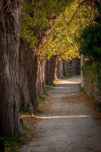Footpath alley