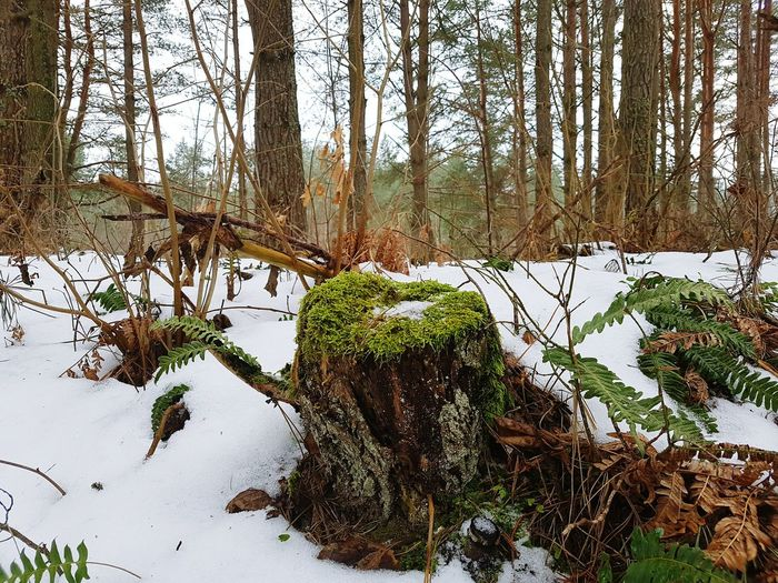 Tree Nature Growth Plant Day Outdoors Tree Trunk Forest No People Beauty In Nature Tranquility Sky Branch Water Animal Themes Druskininkai Druskininkai Lithuania 🇱🇹