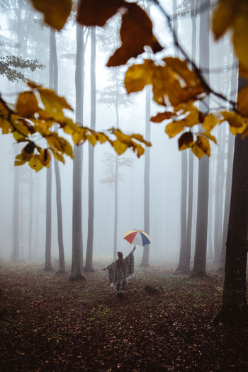 Rear view of woman holding umbrella standing in forest
