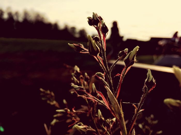 EyeEm Selects Nature Growth Plant Focus On Foreground Outdoors Close-up No People Flower EyeEmNewHere
