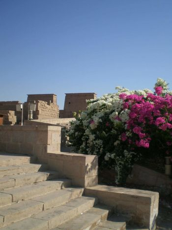 Taking Photos Check This Out Hello World Enjoying Life Egypt Vacation Time ♡ Temple Culture Flowermirrie Sun Edfu Temple Edfu Beautiful Nature Flower Photography Vacation