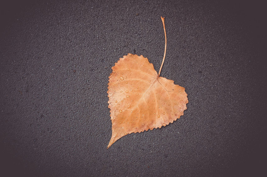 heart leaf Orange Color No People Close-up Single Object Textured  High Angle View Food And Drink Directly Above Still Life Indoors  Leaf Gray Food Plant Part Change Studio Shot Nature Brown Fragility