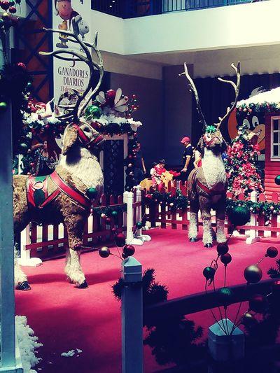 Las Navidades en Ecuador Quito