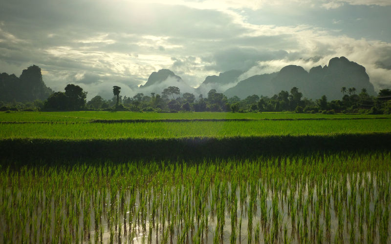 Rice Paddy Against Cloudy Sky