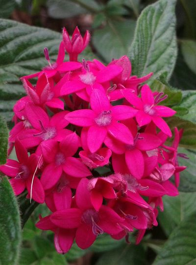 Fucsia Flowers Flower Collection Beautiful Details Many Beautiful Flowers!