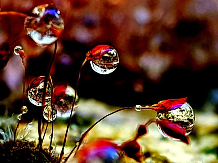 DO THE UNIVERSE A FAVOUR~DON'T HIDE YOUR MAGIC🌟 https://youtu.be/raB8z_tXq7A Raindrops Moss Macro Macro Photography Close-up Outdoors Multi Colored Beauty In Nature Flower Red Nature Fragility Naturelover EyeEm Best Shots Perspectives On Nature Miniscule Waterdrops Wet Droplets Drops Rain Focus On Foreground Life Is Beautiful Nature Lover