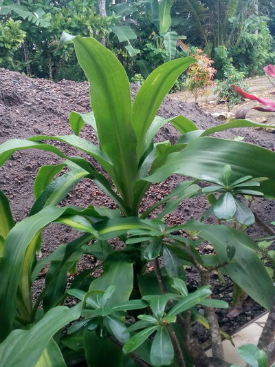 Green Flower Growth Green Color Plant Nature Leaf No People Day Beauty In Nature Freshness Outdoors