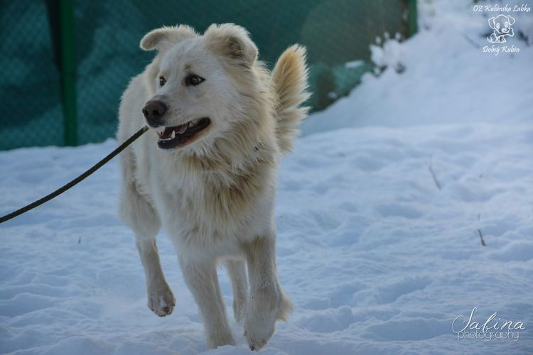 Mišo from the shelter :) Beautiful Shelter Photography Cute Winter Dog White Animal Photo Doglover