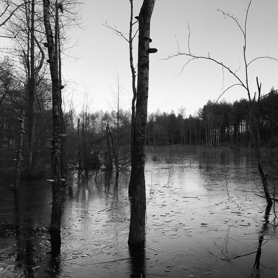 Frozen Pond in B&W, Tree Nature Reflection Water Tranquility Lake Bare Tree No People Outdoors Sky Branch Tree Trunk Tranquil Scene Beauty In Nature Day Blackandwhite Blackandwhite Photography Photography Scenery