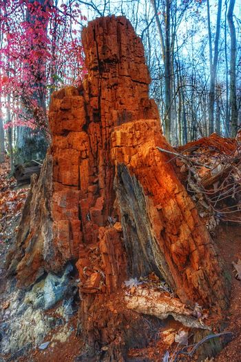 Termites' Home tree stump nature Beauty In Nature Sunlight Tree Day Fall Seasons