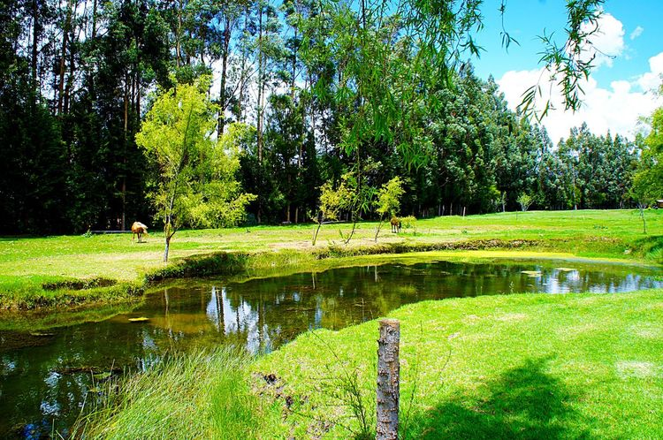 🐴🌿✨ Nature Green Color Beauty In Nature Tree Reflection Growth Water Tranquil Scene Tranquility Scenics Grass Outdoors Day Idyllic Lake Clear Sky Landscape Sky Travel Destinations No People Cajamarca-Perú Horse