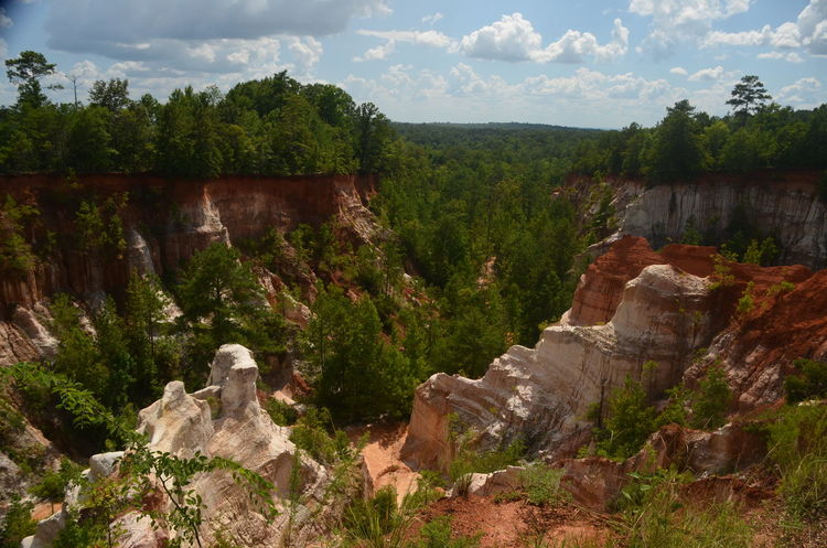 Providence Canyon State Park, Georgia, United States Beauty In Nature Cloud - Sky Day Growth Landscape Mountain Nature No People Non-urban Scene Outdoors Plant Rock Scenics - Nature Sky Solid Tranquil Scene Tranquility Travel Travel Destinations Tree