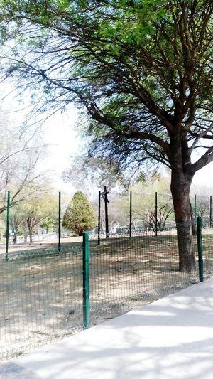 Foto capturada en Bosque Mágico Ciudad de México, Monterrey Nuevo León First Eyeem Photo