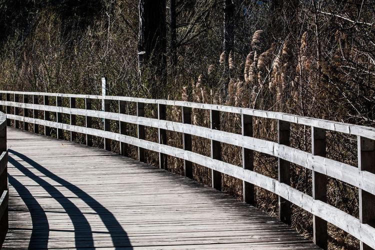 Footbridge Licht Und Schatten Light And Shadow Nature Nature Conservancy Naturschutzgebiet Steg