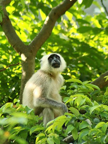 Animal Wildlife Animal Tree Mammal Nature Animals In The Wild One Animal No People Cute Sitting Outdoors Lemur Summer Looking At Camera Forest Branch Day Portrait Monkey Close-up Nature Beauty In Nature Animals In The Wild DSLRShot Canon 1300d