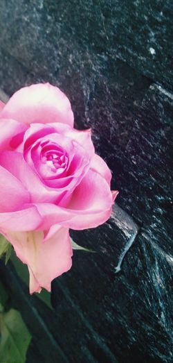Flower Fantasy Black And Pink Perfect Pic For Your Love Inspirations Everywhere.