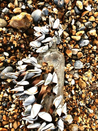 Washed up bottle Goose Barnacles Mussels Marine Debris Washed Up Seaside Nature Taking Back Earth Nature Is Art Bivalve Molluscs Sea Sealife Litter Glass Bottle Pebble Nature No People Large Group Of Objects Outdoors Day Close-up Pebble Beach