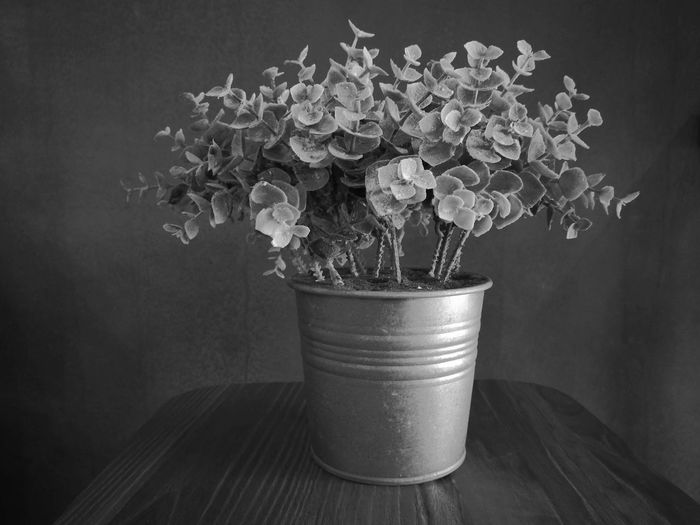 Potted Plant In Flower Pot