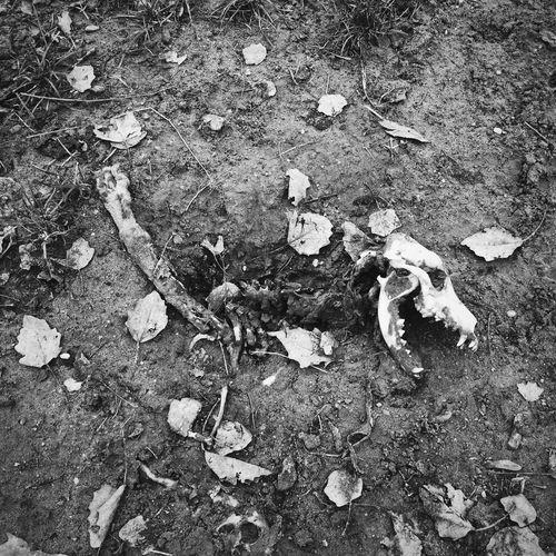 Urban Life UrbanART dog dead skeleton Streetphotography Blackandwhite Black & White Urbanphotography Blackandwhite Photography No People Dead Dead Animal Skeleton Passed