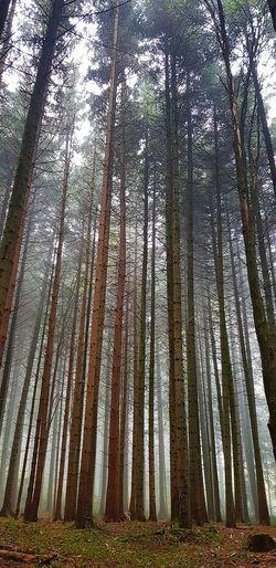 Forest Forest Photography Forest Photography Trees Trees And Sky Tree Tree Trunk Forest Sky Full Frame Scenics