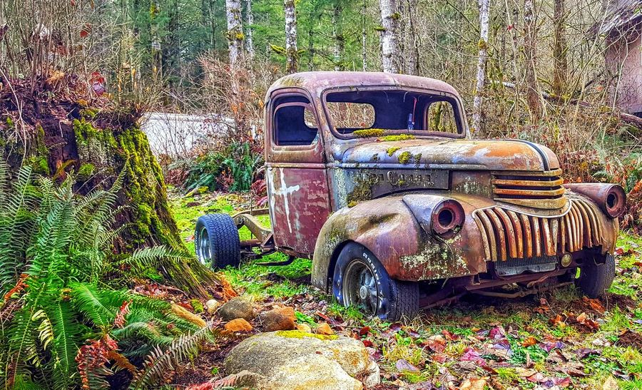 Old pick-up truck in the woods around Marysville, Washington Stationary Land Vehicle Abandoned Old-fashioned Deterioration Weathered Vintage Car Run-down Rusty Ruined Bad Condition Collector's Car