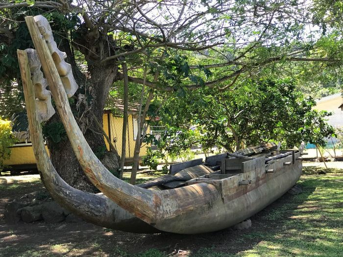 Traditional canoes Museum Centre Culturel Cultural Center Musee Hiva Oa Atuona Marquesas Islands Traditional Canoe Traditions Canoe Plant Tree Growth Nature Day No People Sunlight Tranquility Wood - Material Old