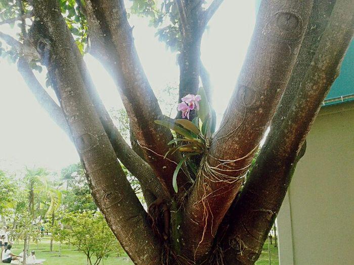 Orquideas Trees