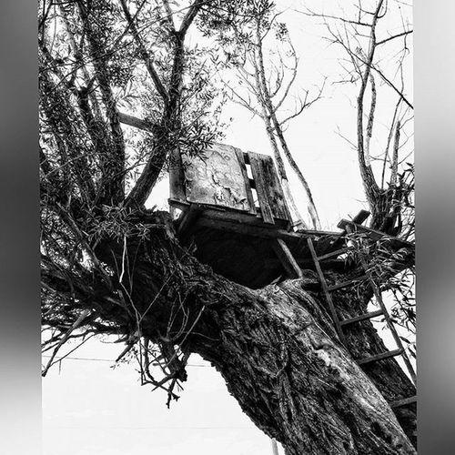 Hell november😍 🍂🍂🍂 Nature Natural Naturelovers Tree Treemagic Instagood Instalike Hot_shotz World_shotz Big_shotz Agacev Instasize Instadaily Instaview View Doğa Kasım November