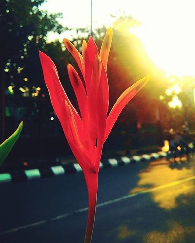 sun shine 💐😘😘 Itssundayfunday ItsSunday Semarang Seputarsemarang Pemkotsemarang Photographerponselindonesia Simpanglima Xiaomi Redmi2camera Photosemarang Mosque Baiturrahman Carfreeday Cfd Like4like Likeforlike Goodmorning Good Goodday Goodtime Happy Love Life Laugh Phonegraphy photography mobilephotography nature building giftr2