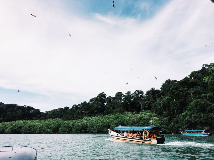 Island Hopping Island Wildlife Wildlife Photography Adventure Eagle Eagle - Bird Boat Serenity Green Nature Scenics Outdoors Tree Bird IPhoneography VSCO Cam Island View  Tranquility Travel Destinations EyeEm Best Shots The Great Outdoors - 2018 EyeEm Awards